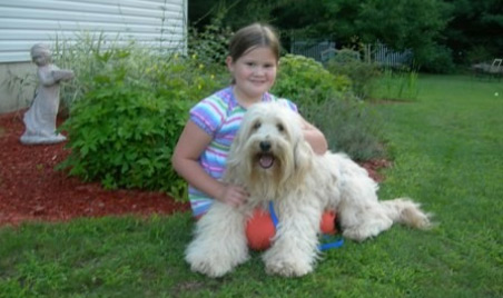 Labradoodle Puppies on Labradoodle Puppies By Southern Maine Labradoodles  Recommended